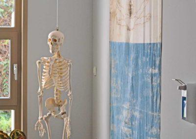 Chiropraktik Waier - Anatomie zum Anschauen